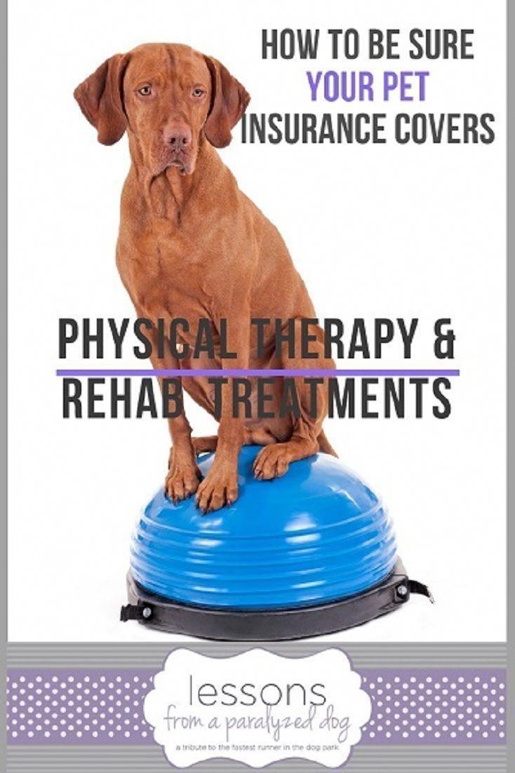 Medical Health Insurance Healthinsurance Health Insurance Does Your Pet Insurance Cover Private Health Insurance Supplemental Health Insurance Pet Insurance