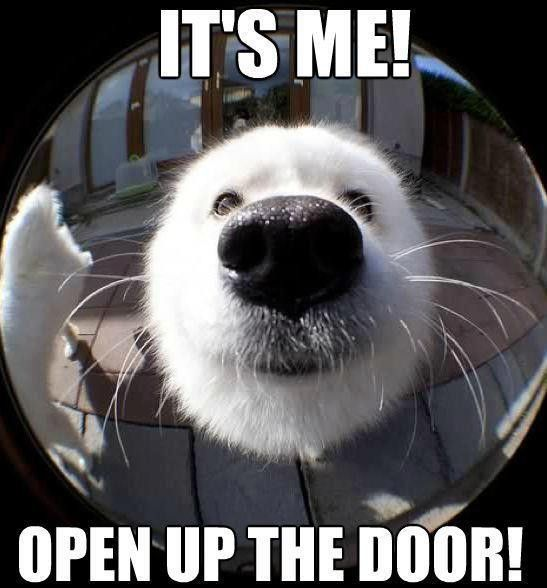 Dog with his nose up near the peep hole: It's me! Open up the door!