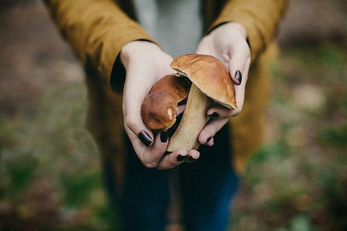 Mushrooms | Polina Ilchenko
