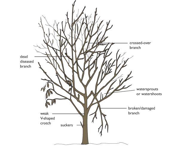 tree pruning scheme