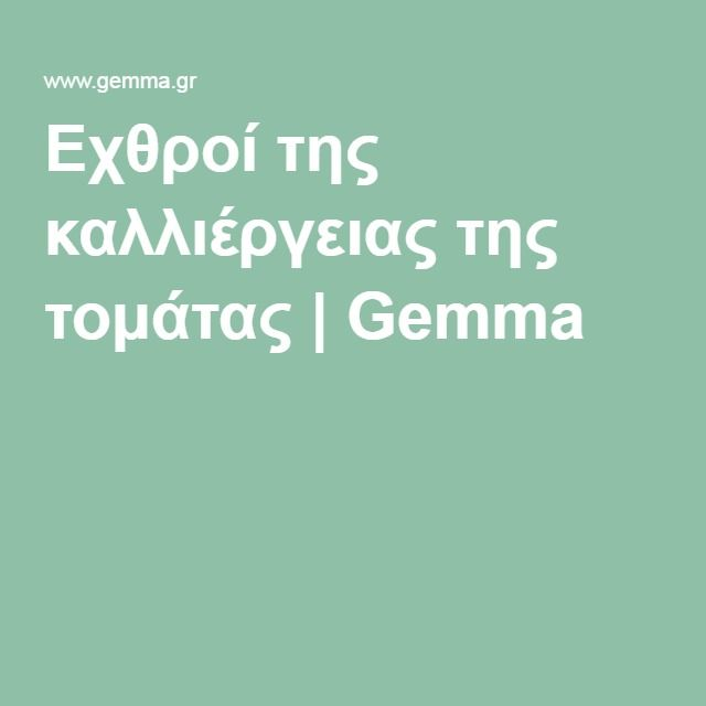 Εχθροί της καλλιέργειας της τομάτας | Gemma