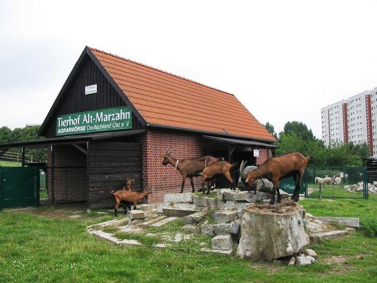 Der Tierhof Alt-Marzahn bietet viele Aktivitäten für Kinder an. Für Kindergruppen und Schulklassen gibt es Führungen und Projekttage. Beliebt bei den Kindern ist auch das Ponyreiten.   Der Tierhof verfügt außerdem über eine große Fachbibliothek zu den Themenschwerpunkten Agrarwissenschaften, Biologie, Ökologie, Veterinärmedizin und Tierzucht.