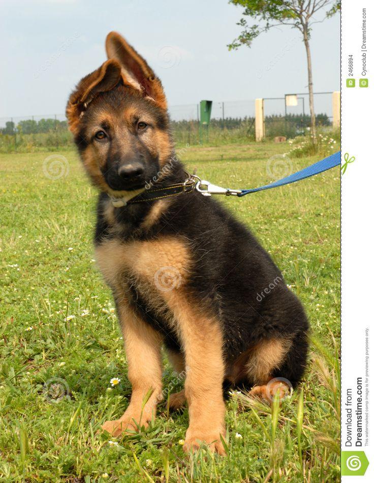 Dog Training Treats Vs Praise