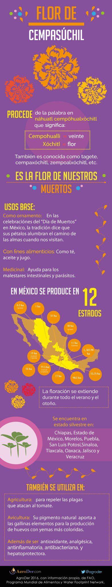 #FlorDeCempasúchil