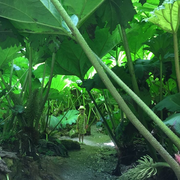 Trebah Gardens, Cornwall - Copyright: www.globalmousetravels.com