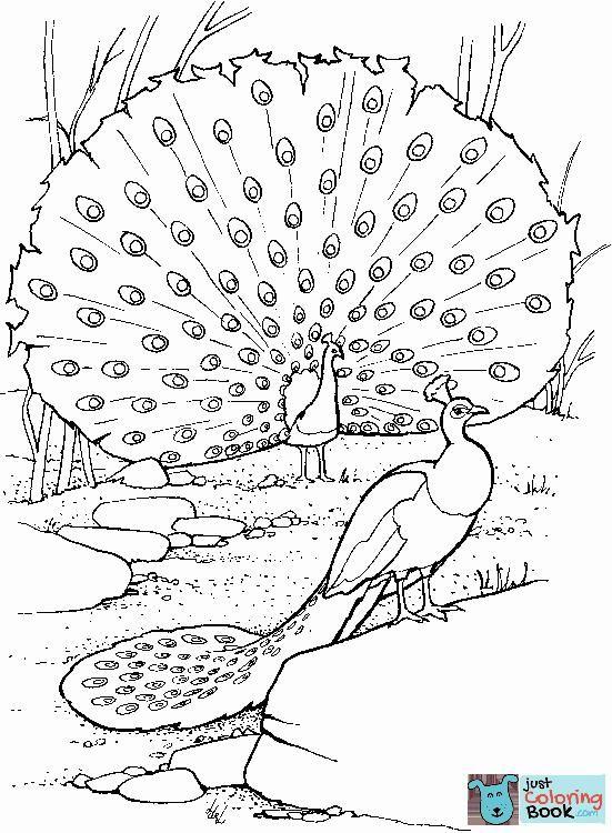 Zwei Pfauen Malvorlagen kostenlos druckbare Malvorlagen im Zusammenhang mit Pfauen …   – Bird Coloring Pages