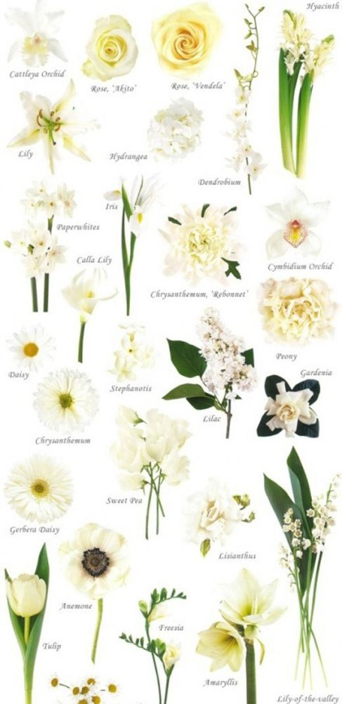 Some names for flowers. I like the look of paperwhites but the odor they give is not pleasant to me. Lillies have a more appealing aroma.