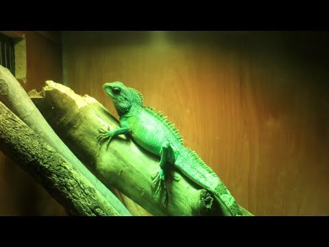 Types Of Pet Reptiles | Welcome to Pet Supermarket