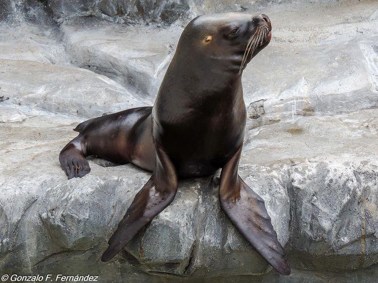 https://flic.kr/p/thNYA9 | Pensando. Thinking. | Zoológico de Buenos Aires.