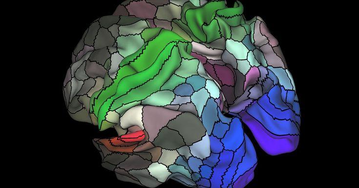 手机壳定制underwear Data from    brain scans performed as part of the Human Connectome Project allowed researchers to unveil the brain  s hidden geography