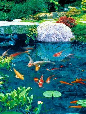 Tenemos un vecino, que tiene un hermoso estanque Koi. Con su aireador, los peces son capaces de permanecer en el agua durante todo el año. ¡Quiero uno! Y ... una casa verde