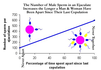 females Sperm conception and with competion
