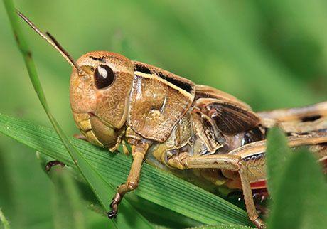 Cricket #nature #piemonte #italy #provinciadicuneo