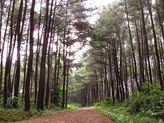 Hot Traveler: Wisata Ke Gunung Pancar Bogor