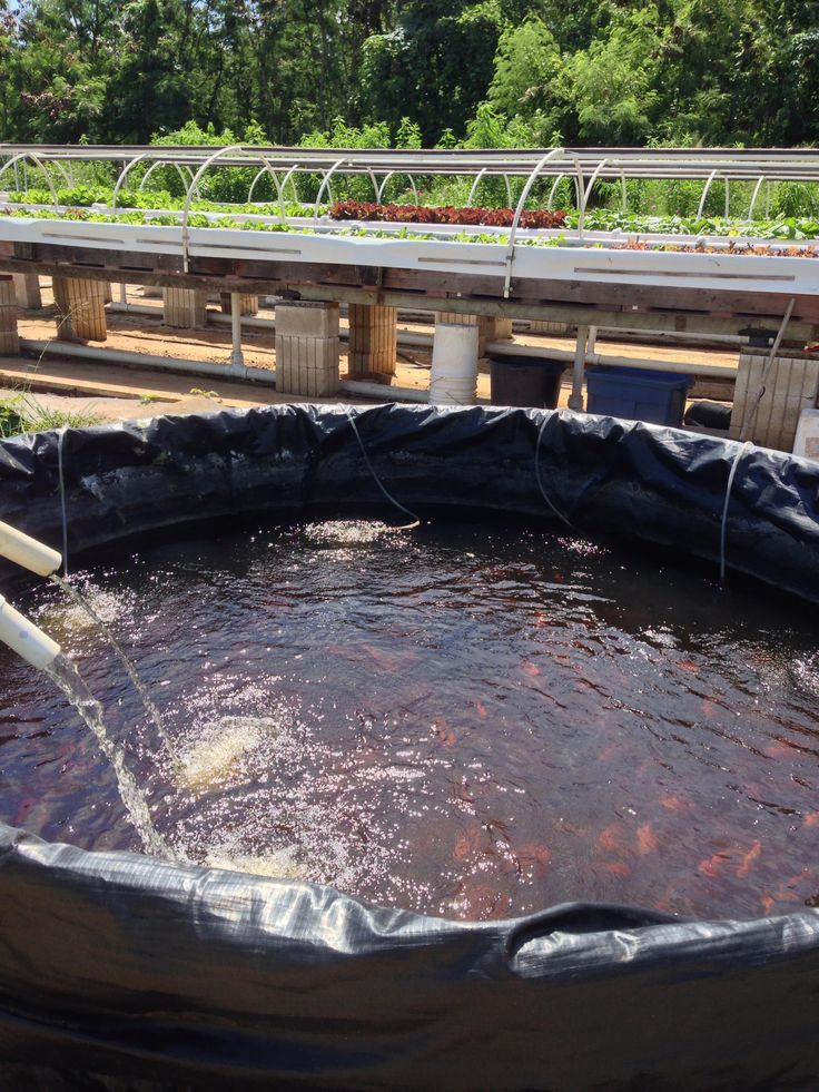 Goes to show a fish pond can be made pretty simply just for Tarpaulin fish pond