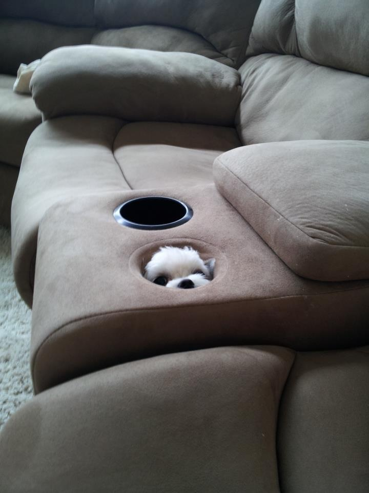 my sneaky puppy
