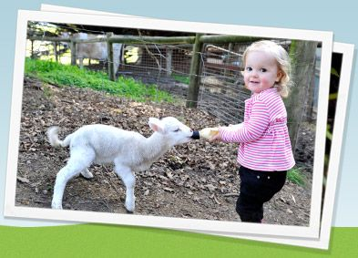 Children get the chance to feed the lambs, always one of the highlights of the visit!