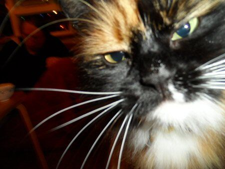 Our own Grumpy cat Joy
