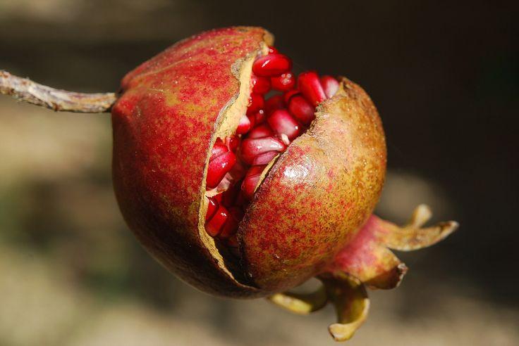 Granatapfel - Powerfrucht