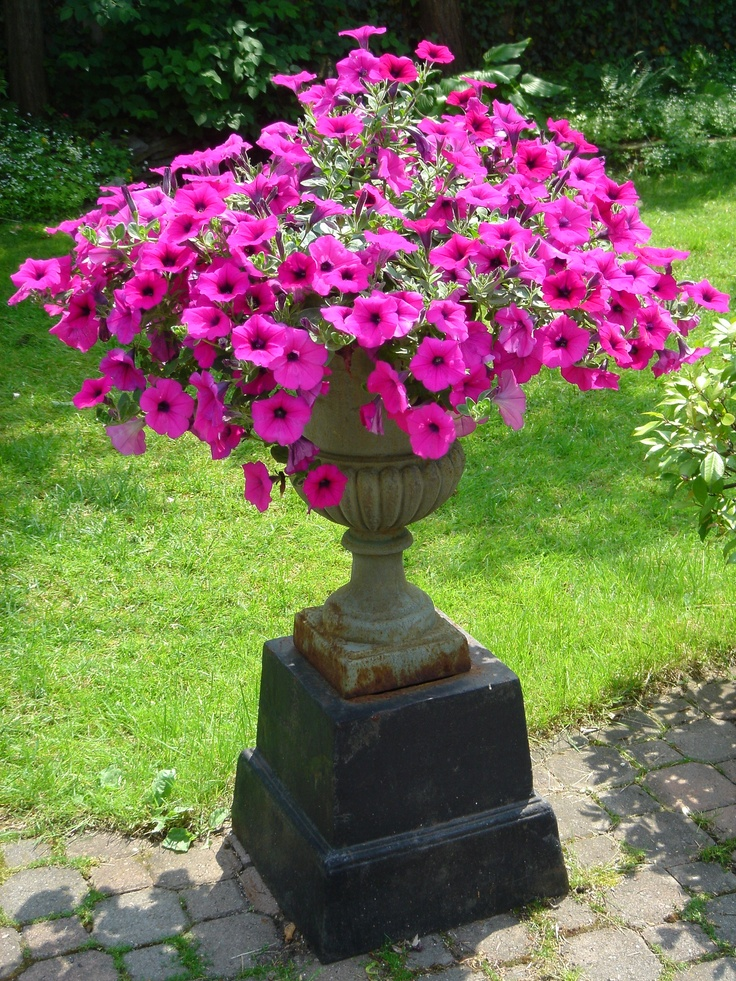 117 best images about outdoor flower pots pedestals on pinterest gardens garden ornaments - Growing petunias pots balconies porches ...
