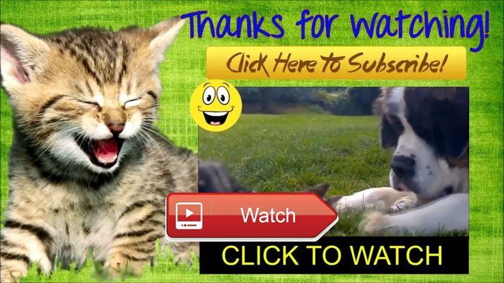 😸 FUNNY CAT 😼 apa yang terjadi jika kucing bersikap demikian di sekitar anda 😽 on Pet Lovers 😻