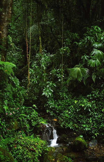 Panama. A little bit of everything! Rainforest, beach, canal and culture in one place.