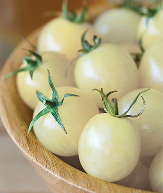Italian Ice Hybrid Tomato ripen from green to ivory white