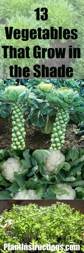 Vegetables That Grow in Shade #growingvegetablesinshade #fallvegetablegardening