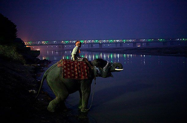 Fancy - Sonepur near Patna, India