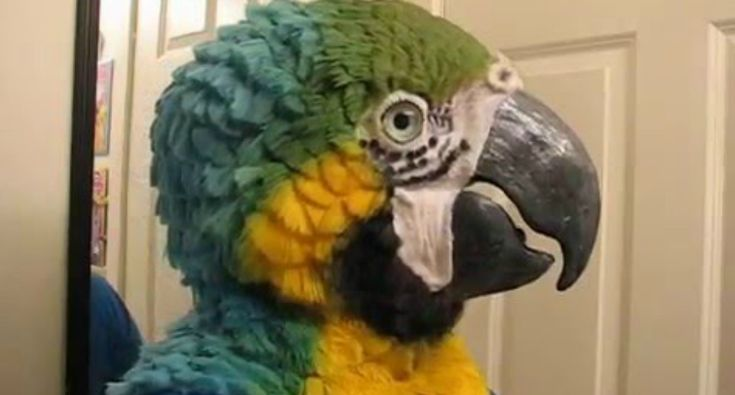 This Woman Makes Incredibly Realistic Animal Head Masks. Here's The Blue & Gold Macaw