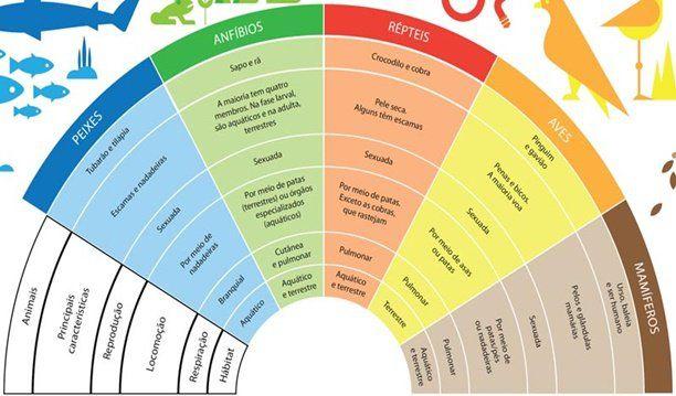 Características, Exemplos e Diferenças entre Peixes, Anfíbios, Répteis, Aves e Mamíferos