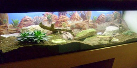 Great leopard gecko vivarium, and instructions on how to build one!