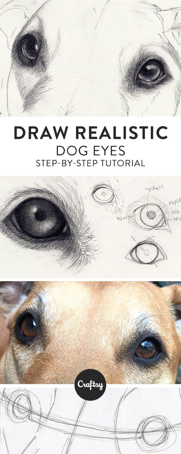 Drawing a realistic dog starts with the eyes! Learn about the structure of a dog... 1