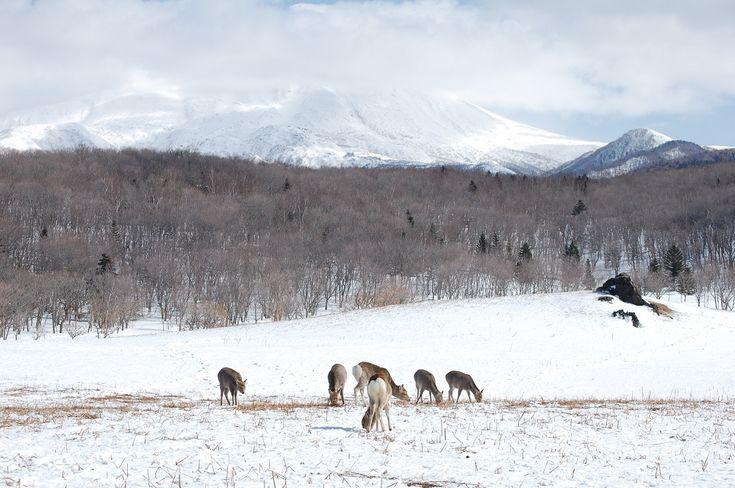 Shiretoko National Park in winter.