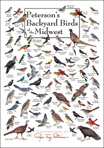 Peterson's Backyard Birds of the Midwest Poster  These are the birds I knew when growing up.