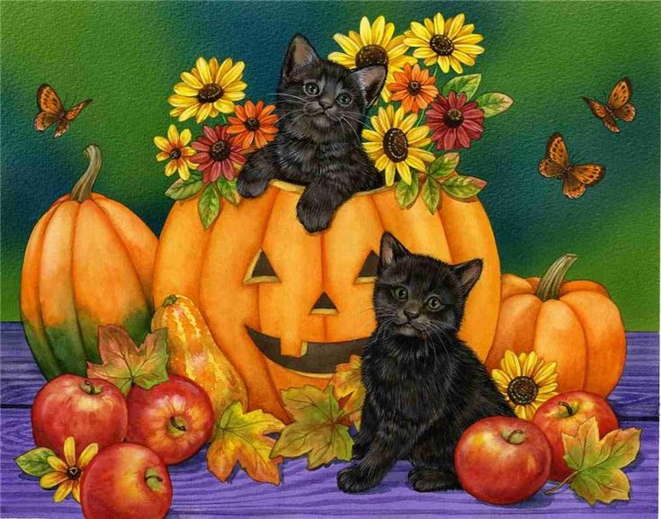 Cute Fall Pumpkins Wallpaper | cat picture850x667 with jane madaymiotic pupilwhiskerssittinglooking ...