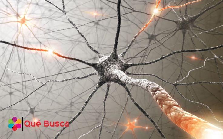 Los cientificos creen haber hayado la clave para crear un cerebro humano: la sinapsis artificial. Al imitar las conexiones entre las neuronas que suceden dentro del cerebro humano podriamos estar a un paso más cerca de tener mejores robots, autos que se conducen a si mismos e incluso obtener mejores diagnósticos médicos.