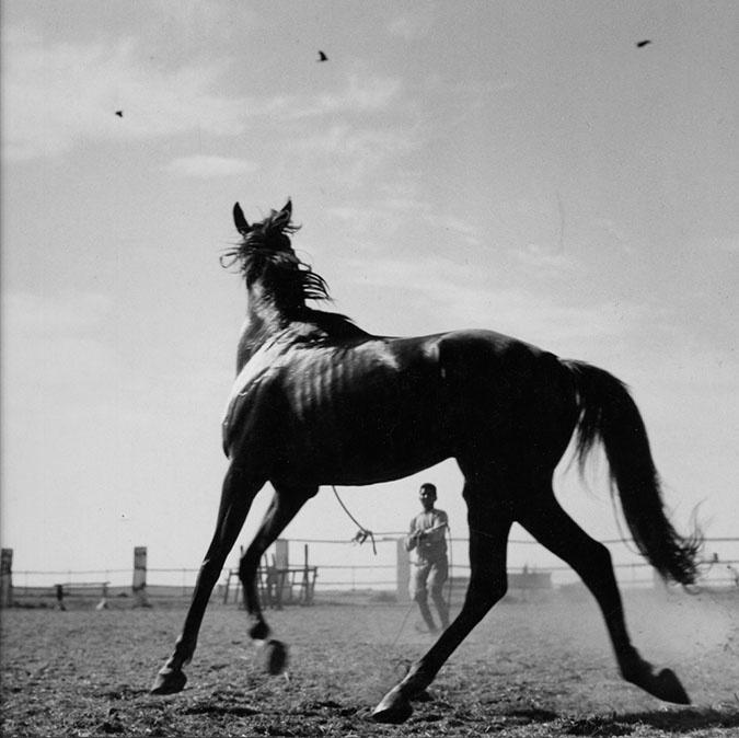 Dmitri Kasterine: Thoroughbred, Karachi, 1955