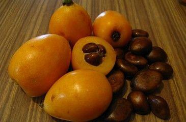 Фрукт Мушмула - чем полезна и где растет дерево, выращивание в домашних условиях и противопоказания