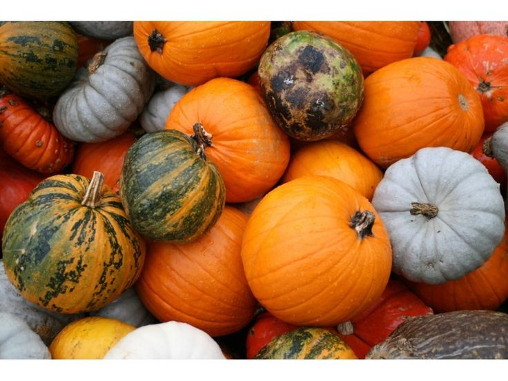 North Fork, NY - Pumpkin picking season is here! We've compiled a list of some of the best farms for pick-your-own pumpkins and other fall festivities. | Patch