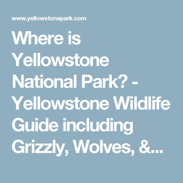 Where is Yellowstone National Park? - Yellowstone Wildlife Guide including Grizzly, Wolves, & Bison