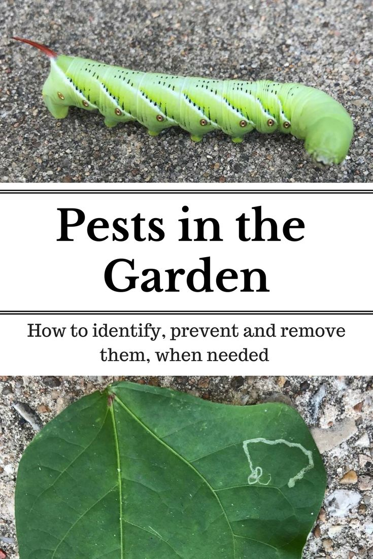 19 Best Garden Bugs (Good And Bad)! Images On Pinterest