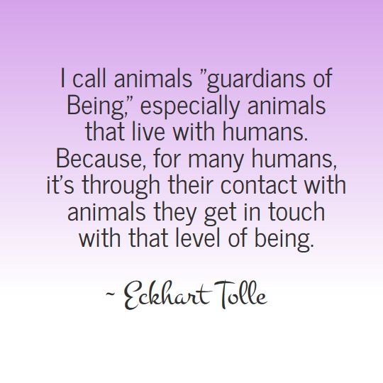 Image result for eckhart tolle quotes on being sleepy