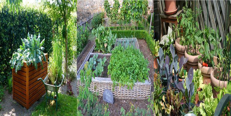 Estes são alguns benefícios de ter uma horta em casa: produção e consumo de alimentos saudáveis livres de agrotóxicos, contato com a…
