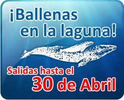 : : Mario's Tours & Restaurant : : Gray whale watching tour guide in Ojo de Liebre Lagoon, Baja California Sur / Avistamiento de la Ballena Gris en Laguna Ojo de Liebre en Guerrero Negro, Baja California Sur, México.