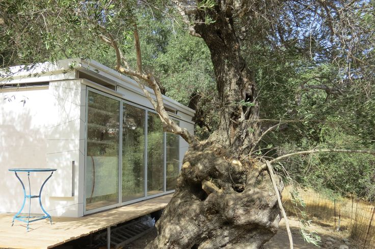 exterior through the olive groves