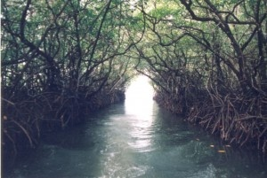 "Baratang Island, India. Beautiful trees branching over a waterway. Maybe not ""woodland,"" but, there are trees and water involved."