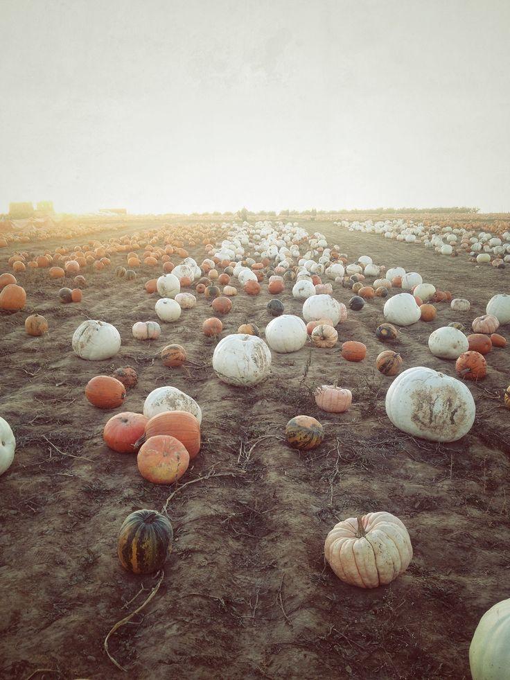 The prettiest pumpkin patch! It's almost Autumn!