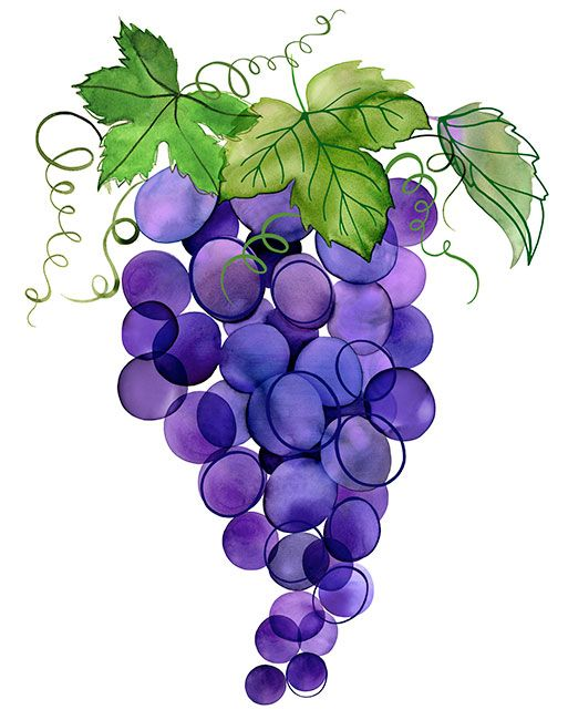 Las 25 mejores ideas sobre vides de uva en pinterest for Vine craft ideas