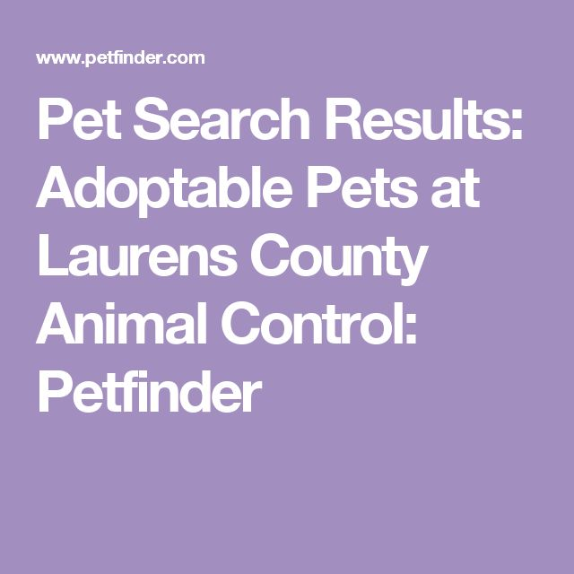 Pet Search Results: Adoptable Pets at Laurens County Animal Control: Petfinder